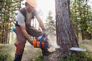 Lumberjack Cutting Down Trees