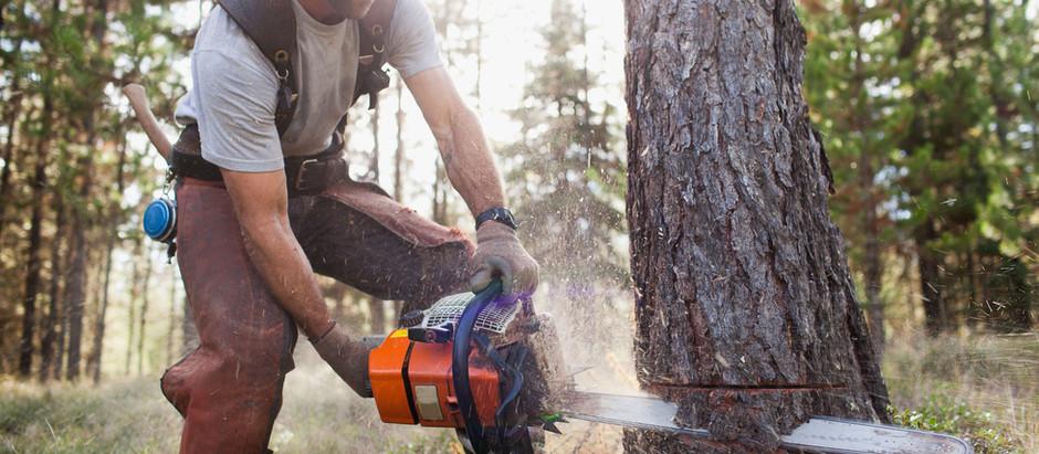 Posso cortar uma árvore?