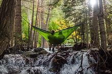 Amaca della foresta