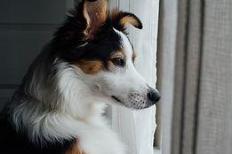 Ciekawy pies