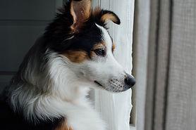 好奇心の強い犬