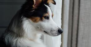 ペットを飼育する人が新型コロナウィルスについて知っておくと良いこと