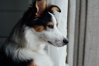 Nysgjerrig hund