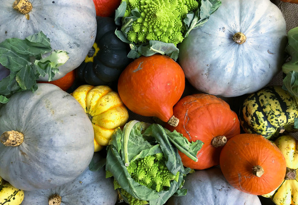 Food and Harvest