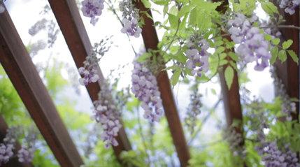 Morning flowers inspiration