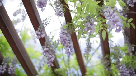 Blommor via balkarna
