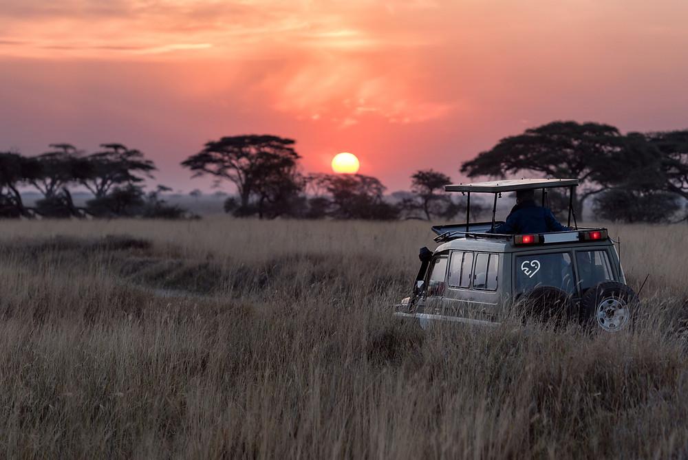 Jeep driving across safari landscape as the sun sets.