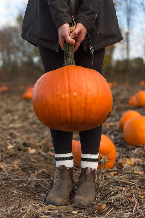 "Pumpkin Mrs. Wrinkles- 2.5"" Pot"