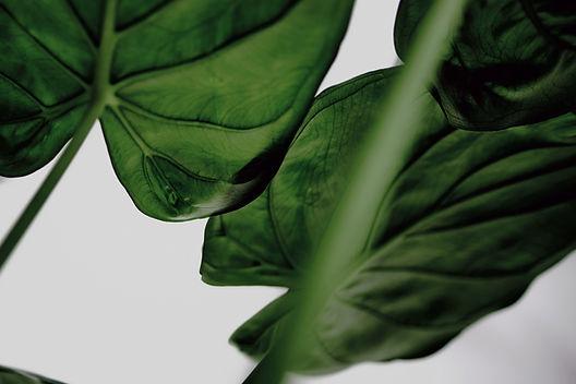 Daylesford Massage Green Leaves