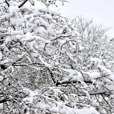 'אור מירושלים' לכבוד השלג ולחודש אדר | אפרת בזק