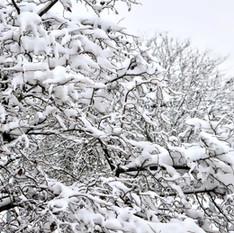 'אור מירושלים' לכבוד השלג ולחודש אדר   אפרת בזק