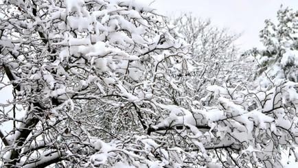 L'hiver en médecine traditionnelle chinoise