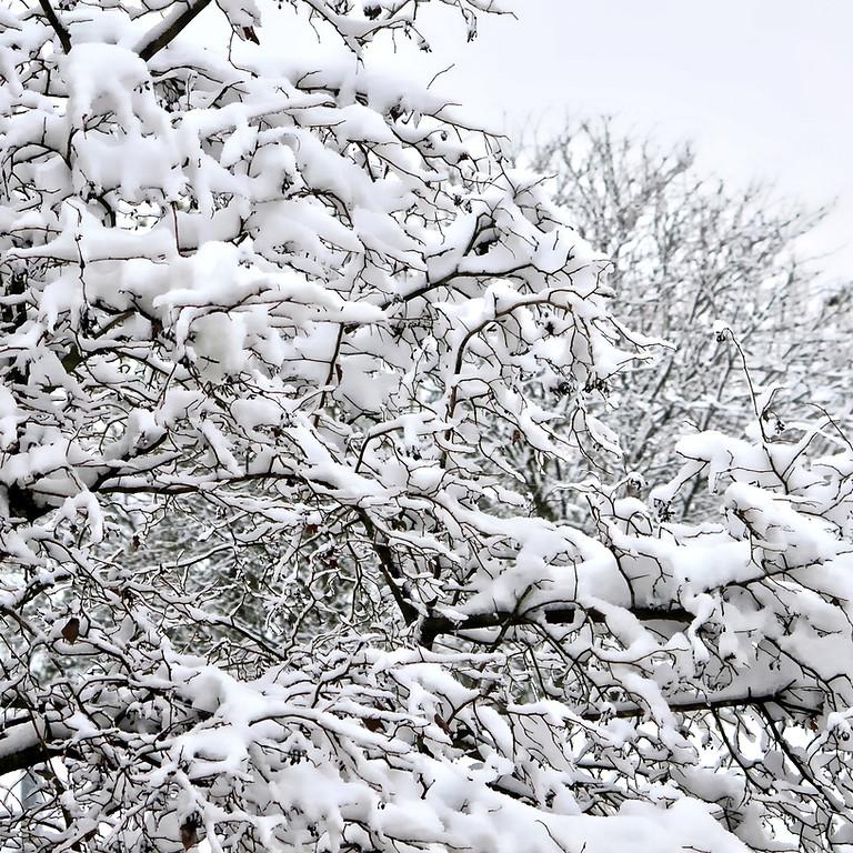 Préparez l'hiver naturellement