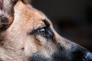 Hundeprofil