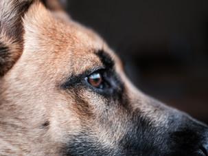 Innerer Wachhund