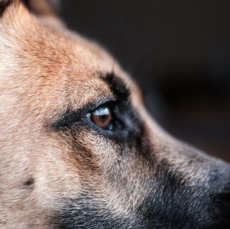 SNIFF DOGS: Can che fiuta (covid) non morde