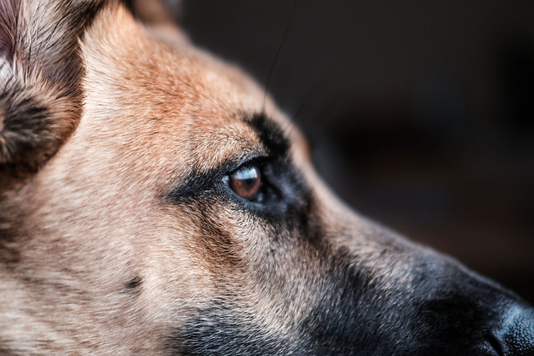 犬のプロフィール