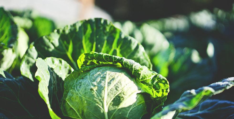 Napa Cabbage-each