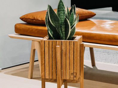 Snake Plant: Capable of Purifying Air And Can Be Used For Feng Shui Purposes