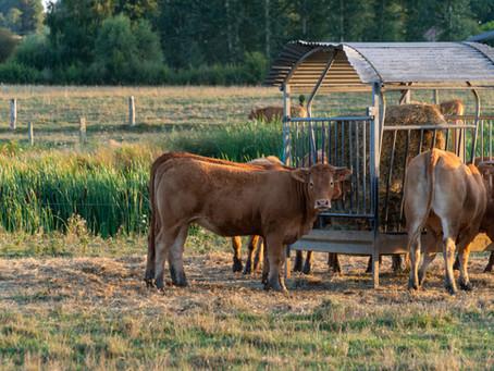 丑年に寄せて~犬猫にとって牛肉は不自然な食餌?