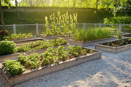 Community Kitchen Garden