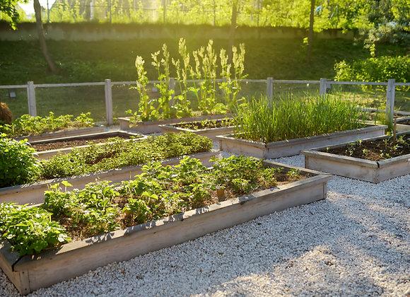 Entire Vegetable & Herb Garden - Plant Sale