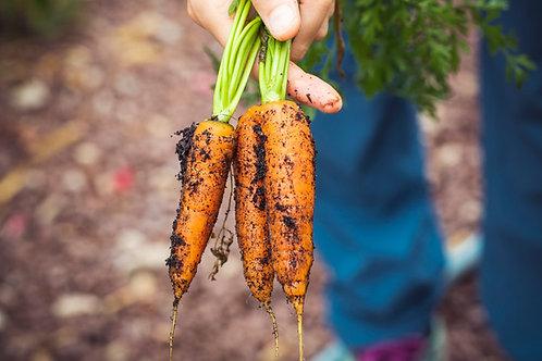 Botte de carotte nouvelle