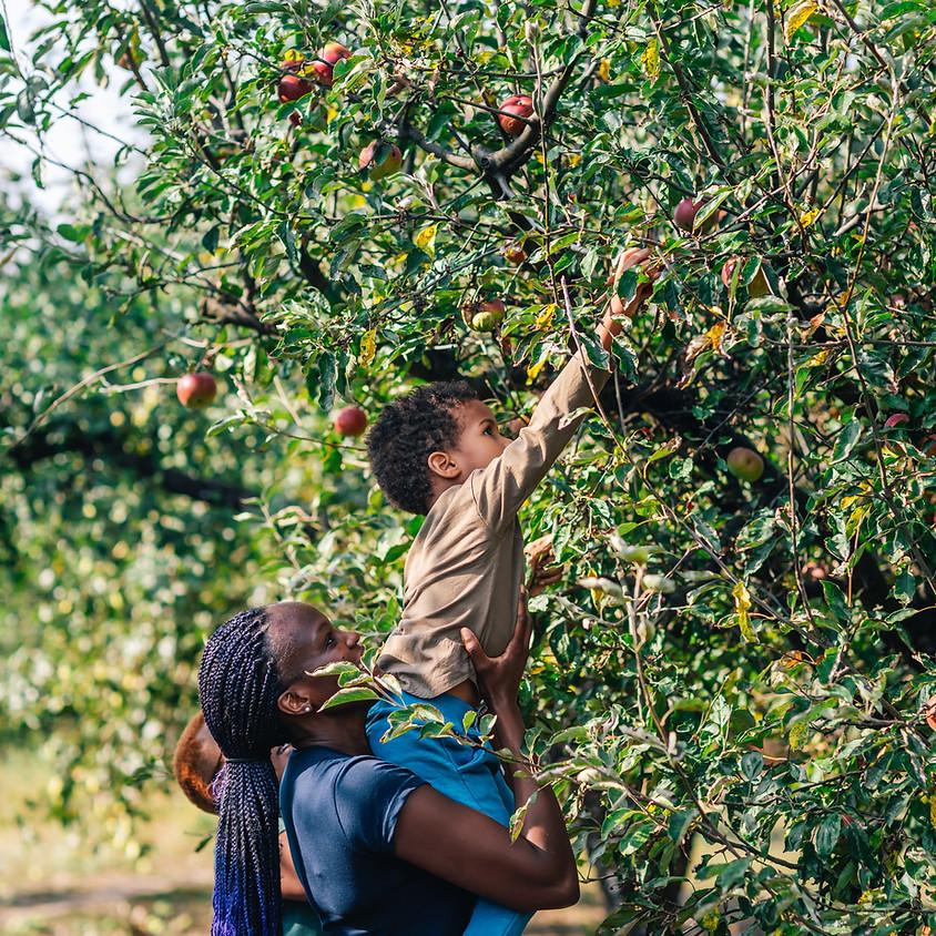 U-Pick Apples @ Freedom Run Winery