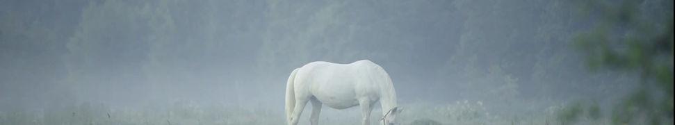 Horse Bemer