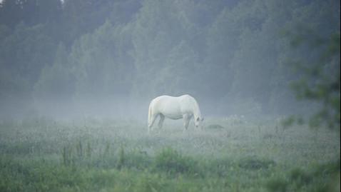 Enchanted Grey