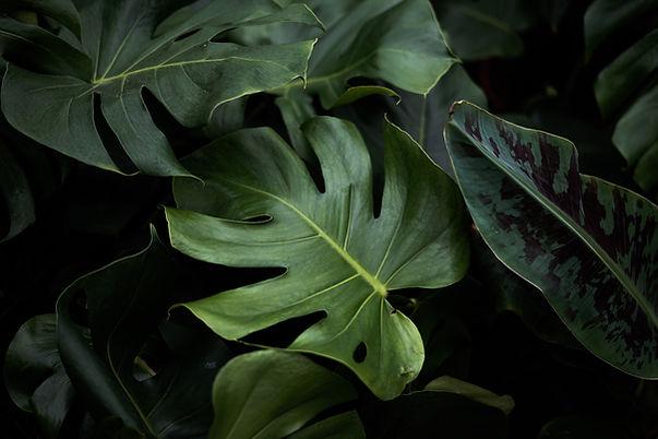 Tropical Leaves