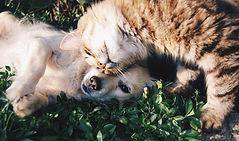 เพื่อนสุนัขและแมว