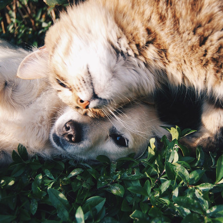 Flea and Tick Prevention: Safe, Natural Options for Our Pets & the Environment by Dr. Katie Kangas