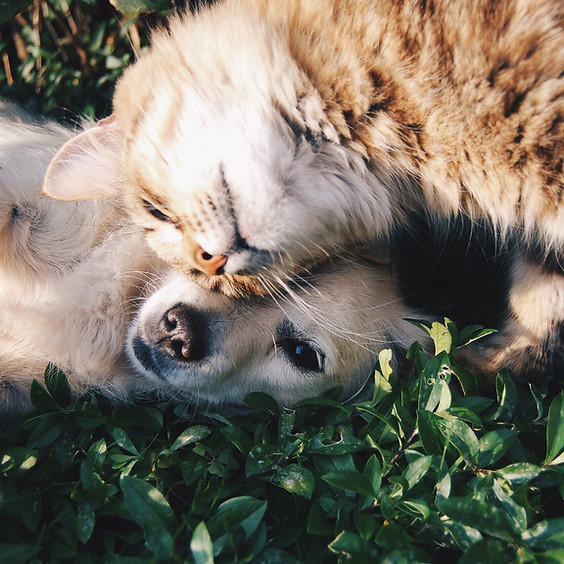 Member Workshop: Caring for our Aging Pets