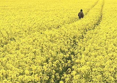 Fields of Gold