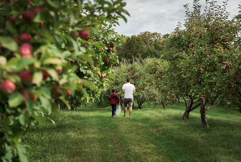 dad and son walking through orchard