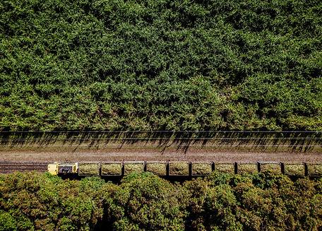 Green Crops