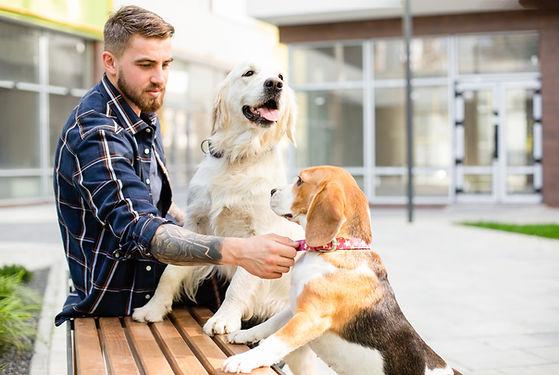 Amante de los perros