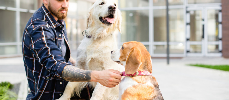 What some experts say about PD and pets