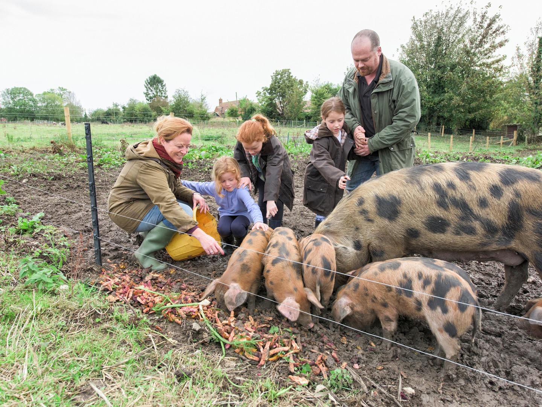 Familia alimentando cerdos