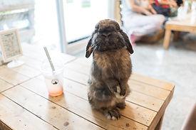 Coniglio curioso
