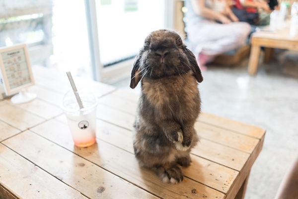 Nieuwsgierig konijn