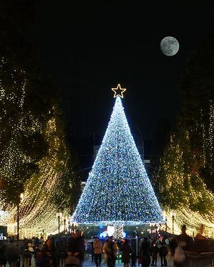 Large Christmas Tree, Christmas Lights Tour
