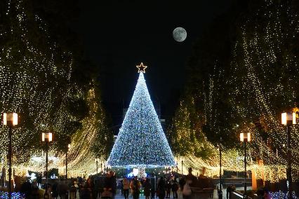 Grand arbre de Noël