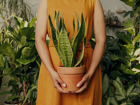 8 hard-to-kill houseplants for beginner plant parents