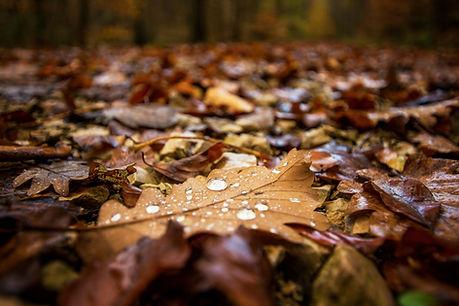 Tau auf Herbstlaub