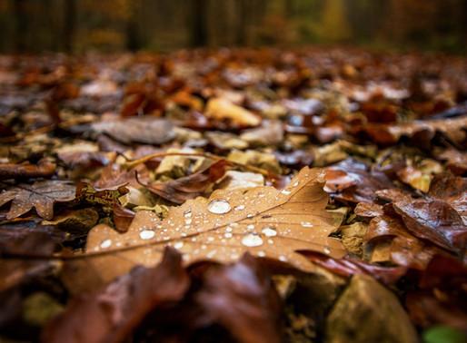 Autumn...Let Go, Prepare to Restore