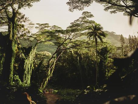 Ein Wegweiser durch den Ernährungsdschungel