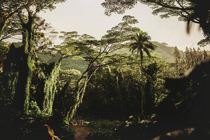 Güzel doğa