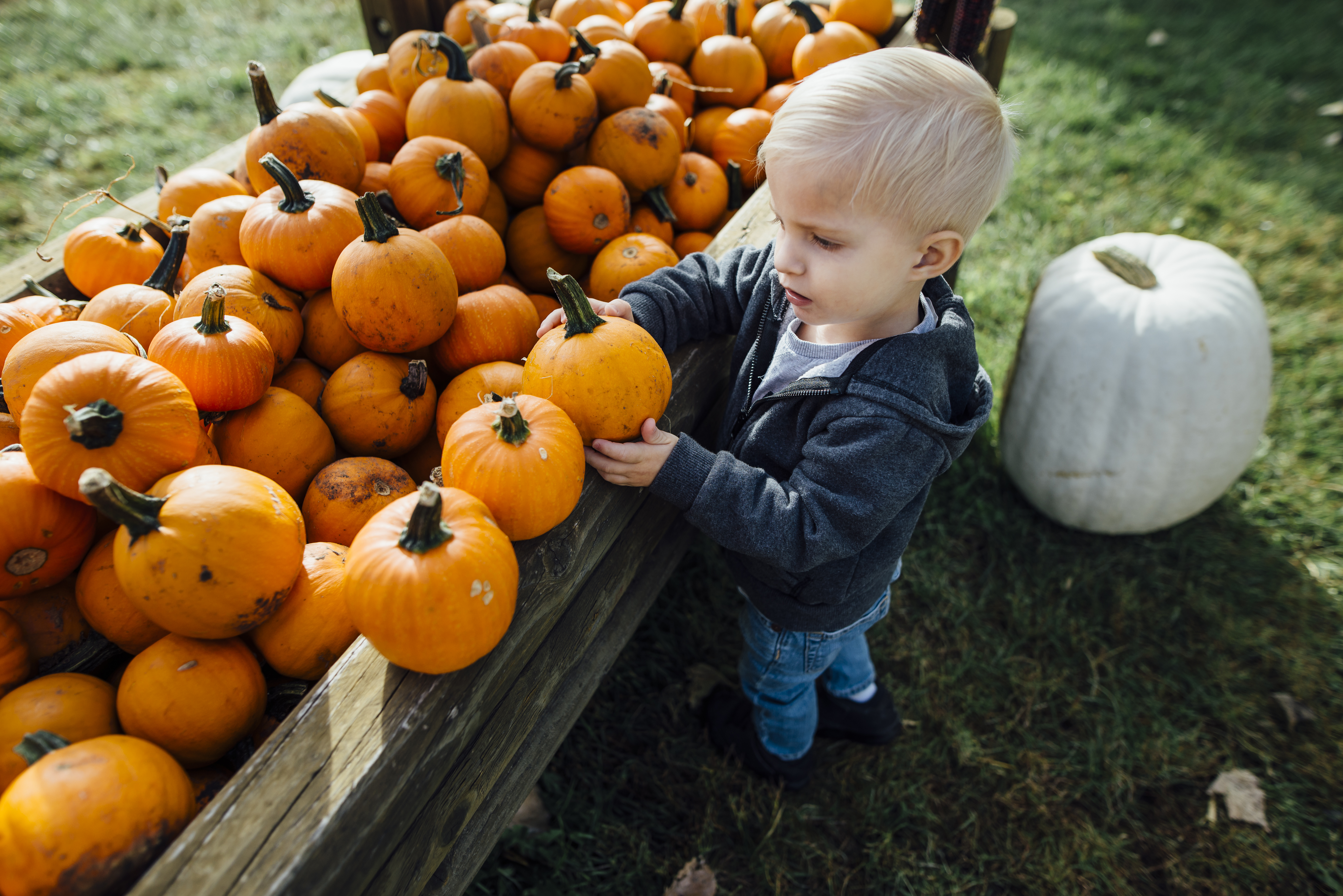 Boy Holding Pumpkin